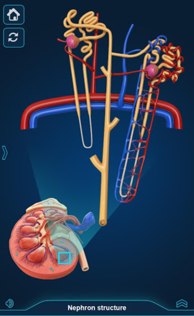 My Urinary System screenshot 7