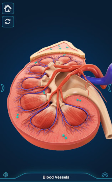 My Urinary System screenshot 8