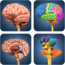 Icon for My Brain Anatomy