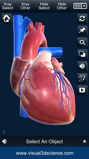 My Heart Anatomy screenshot 2