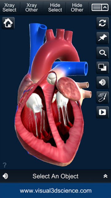 My Heart Anatomy screenshot 4