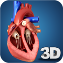 Icon for Heart Anatomy Pro.