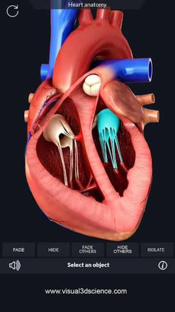 Heart Anatomy Pro. screenshot 2