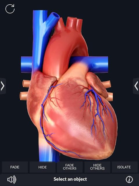 Heart Anatomy Pro. screenshot 8