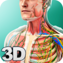 Icon for Human Anatomy
