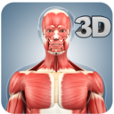 Icon for Muscle Anatomy Pro.