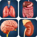 Icon for My Organs Anatomy