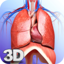 Icon for Respiratory System Anatomy Pro.