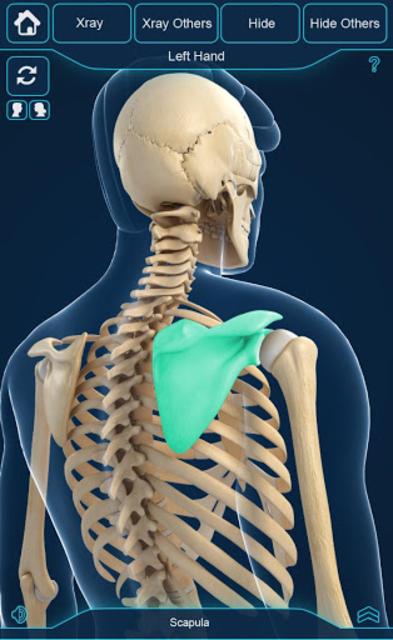 My Skeleton Anatomy screenshot 3
