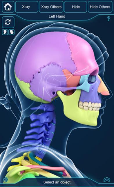 My Skeleton Anatomy screenshot 5
