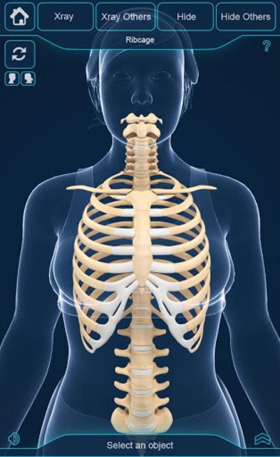 My Skeleton Anatomy screenshot 6