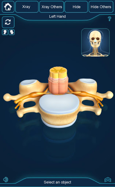 My Skeleton Anatomy screenshot 7