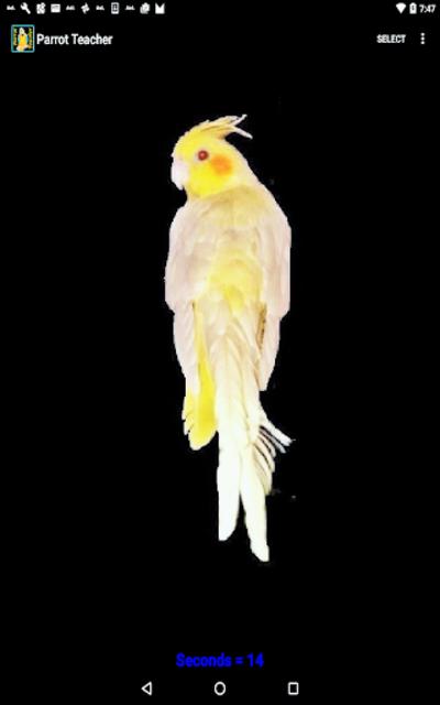 Parrot Teacher screenshot 2