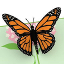 Icon for Premium Butterfly