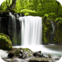 Icon for Relax Forest ~ Nature sounds: sleep & meditation