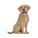 Icon for Brave Puppy : Dog Training Tool