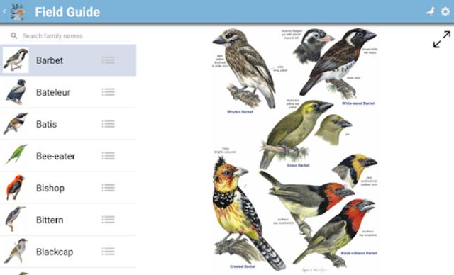 Roberts Bird Guide 2 screenshot 18