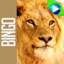 Icon for ANIMAL BINGO - Live Animal Bingo & Slots!