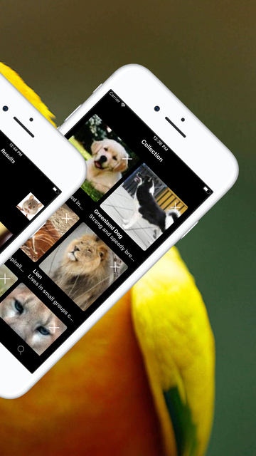 Animal Identifier screenshot 4