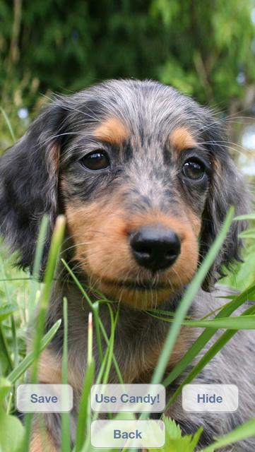Cute Dogs Slideshow & Wallpapers (HD) screenshot 3