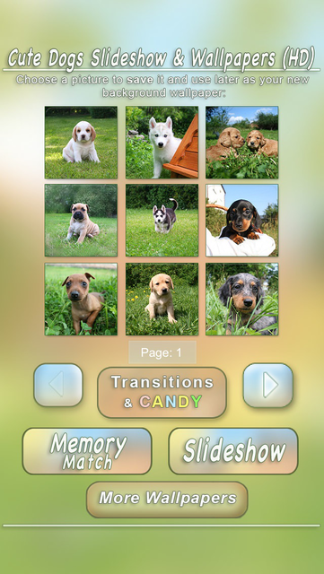 Cute Dogs Slideshow & Wallpapers (HD) screenshot 4
