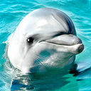 Icon for Lovely Dolphins Slideshow & Wallpapers