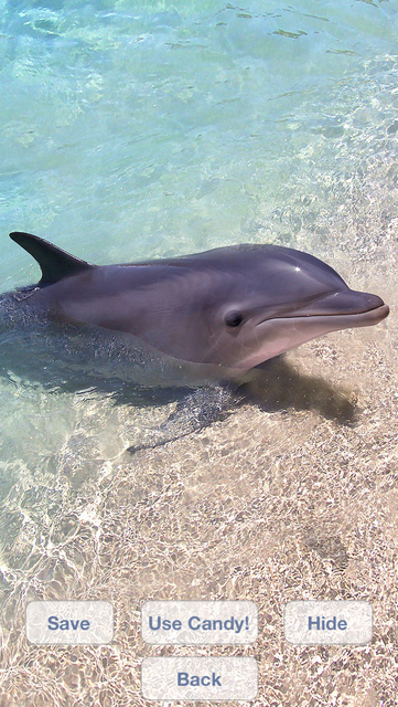Lovely Dolphins Slideshow & Wallpapers screenshot 3
