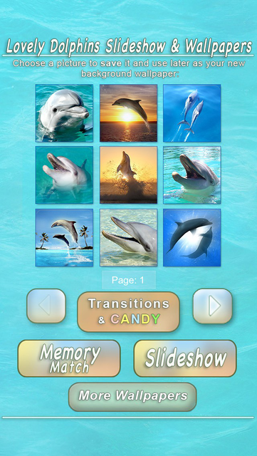 Lovely Dolphins Slideshow & Wallpapers screenshot 5