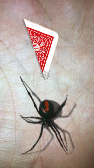 Magic Spider - My Pet Boris screenshot 17