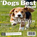 Dog Magazine Apps